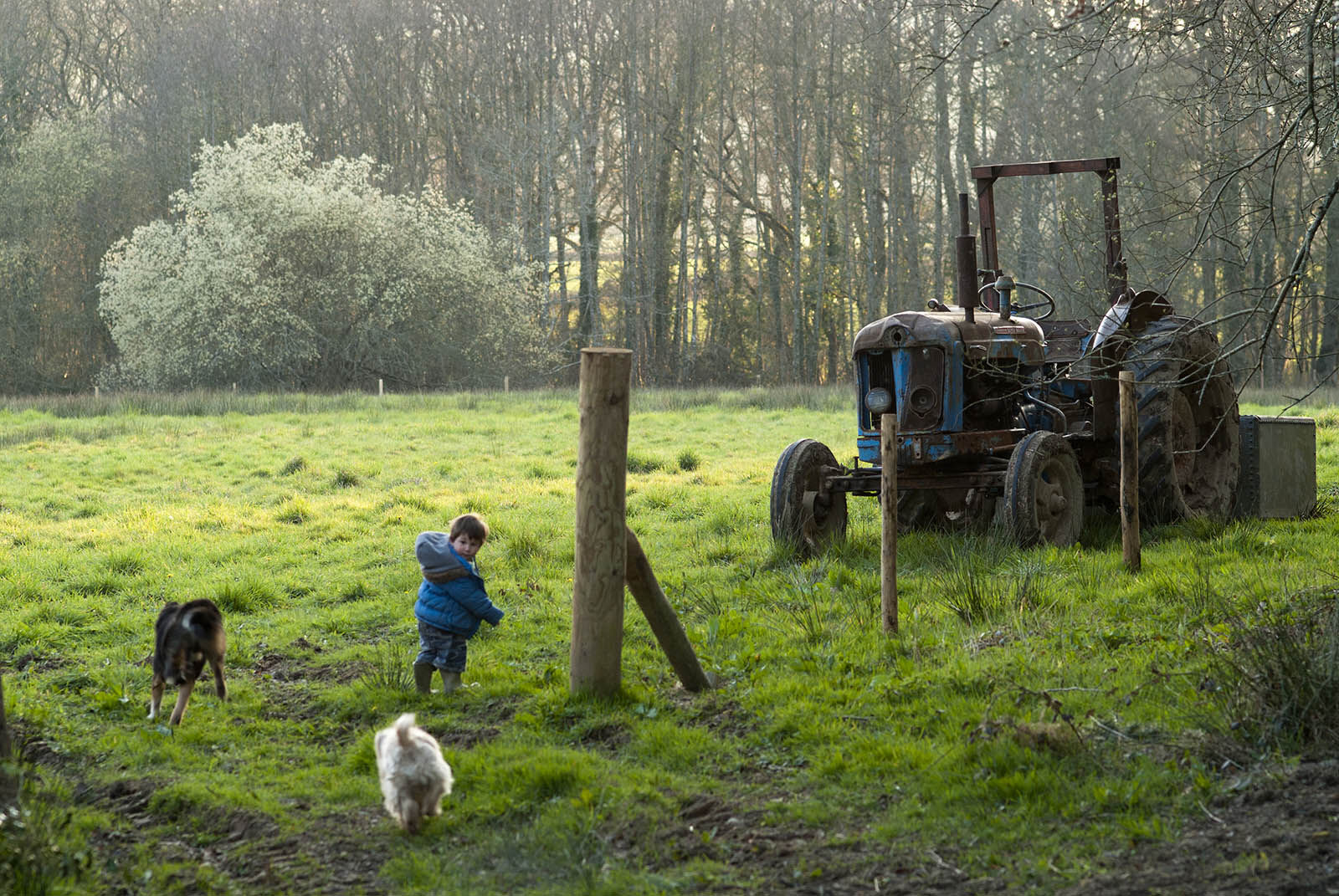 Running to the tractor.