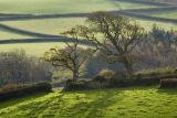 Trees at Alwington, North Devon.