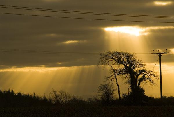 Tree near Shebbear, North Devon.