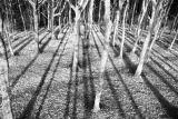 Small woodland near Ashreigny, North Devon.