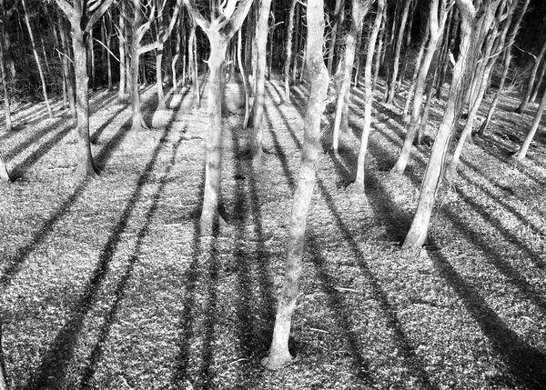 Tree shadows.