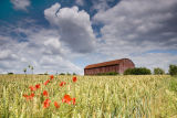 Poppies and Barn
