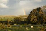 Dartmoor light at Zor.