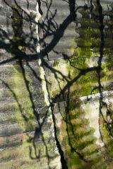 Tree Shadows on Tin