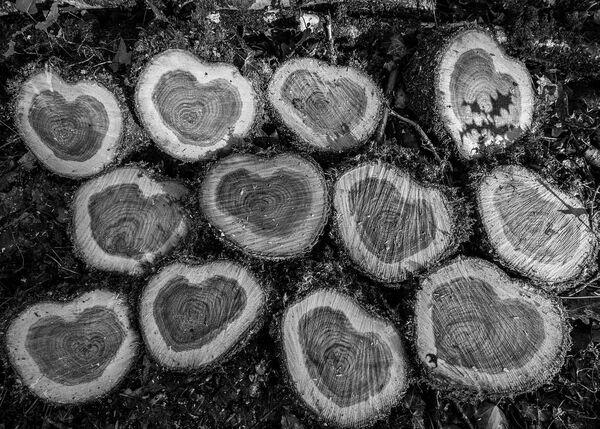 Heartwood.
