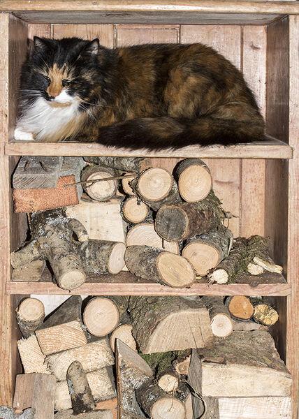 Cat shelf.