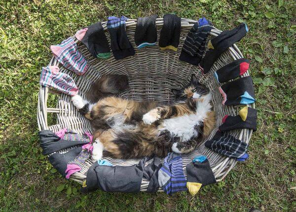 Cat in basket.