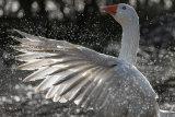 Goose light spray