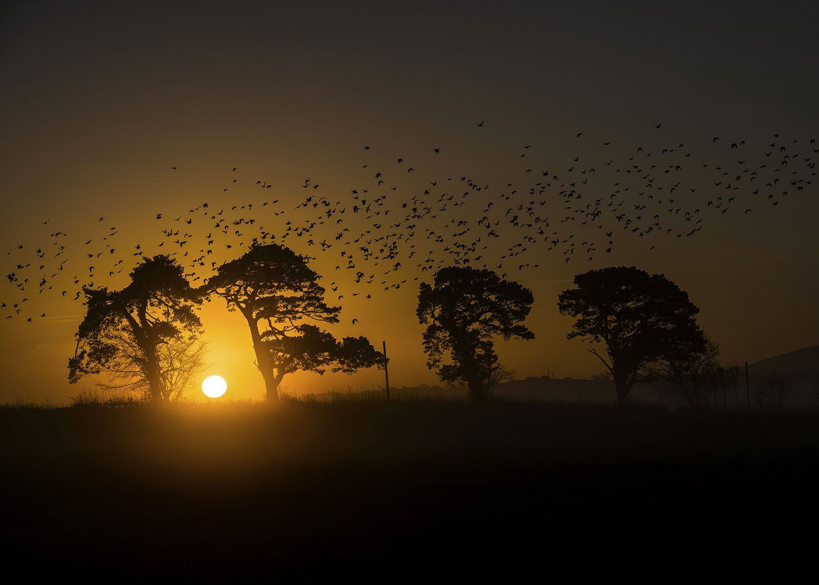 The birds at dawn.