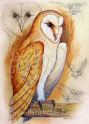 The Barn Owl - Watercolour & Pencil/Conte