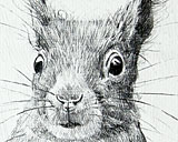 Red Squirrel - Original Pencil Drawing