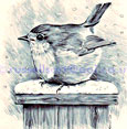 Winter Robin - Pencil original (Sold)