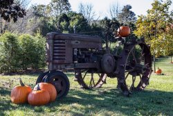 Pumpkins and Tractor, Halloween on the way.
