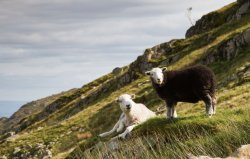 Friends on the Fell