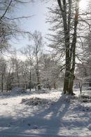 Bolder Wood