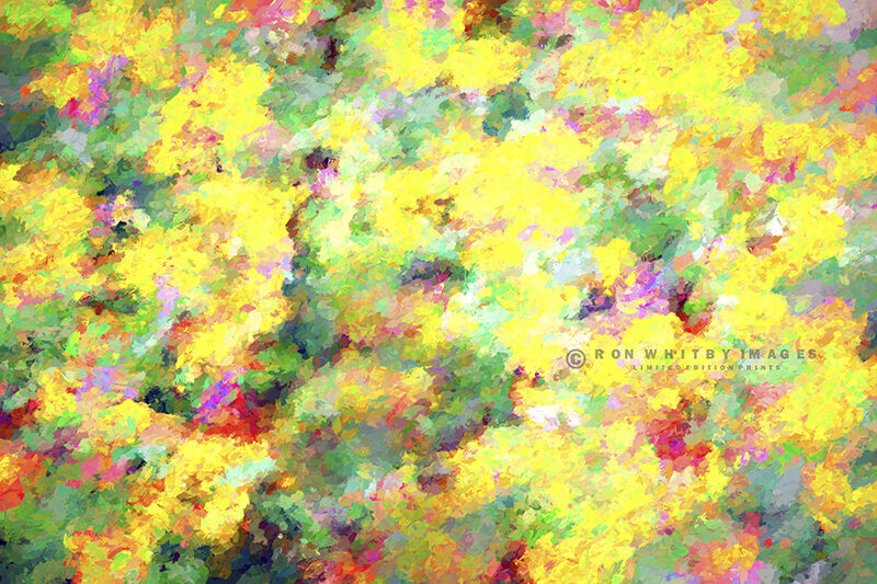 Summer Flowers - Aigues Mortes