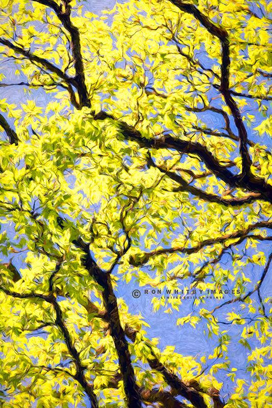Tree at Garrigill - Cumbria