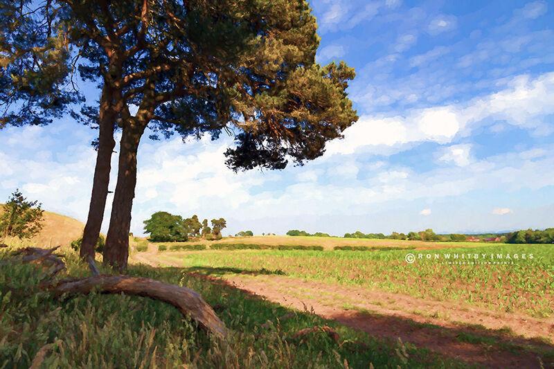 Cheshire Landscape no 1
