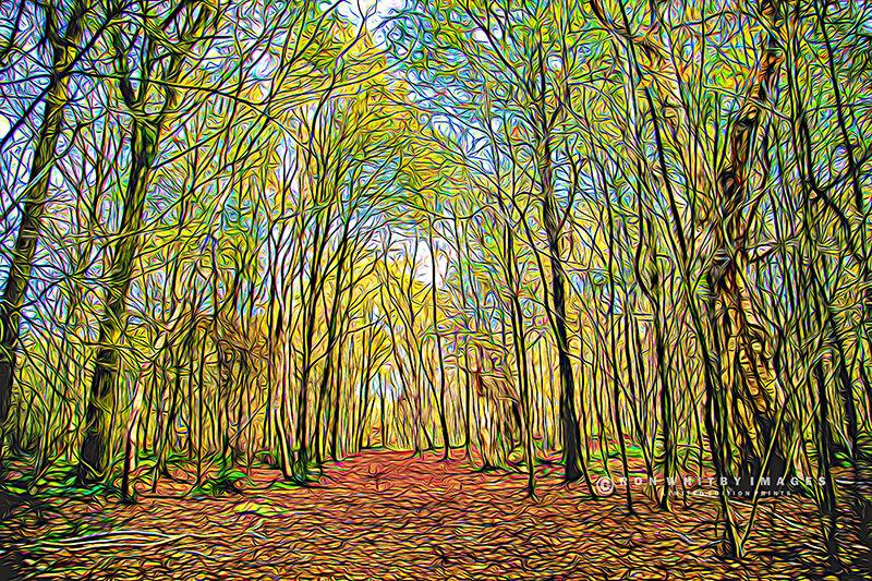 Brown Moss Woods