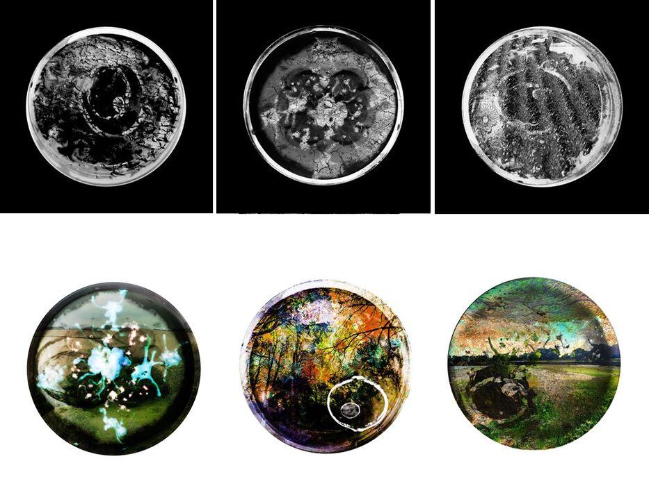 Infertile Landscapes and (In)Fertile Landscapes Rebirthed