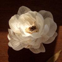 Garlic Peony