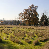 GladstonePark Meadow 14th November 2012