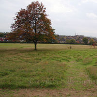 Gladstone Park Meadow Cut 1 on the 28th October 2010