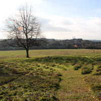 Gladstone Park Meadow Cut 1 on the 5th December 2010