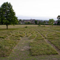 Gladstone Park Meadow Cut 1 on the 14th June 2011