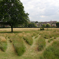 Gladstone Park Meadow Cut 1 on the 28th July 2012 no2