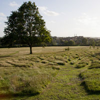 Gladstone Park Meadow Cut 1 on the12th September 2011 after Mr Mc Gregors visit