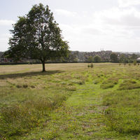 Gladstone Park Meadow Cut 1 on the12th September 2011