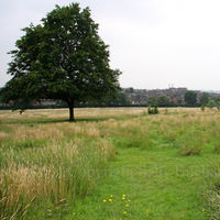 Gladstone Park Meadow Cut 1 on the 28th July 2012