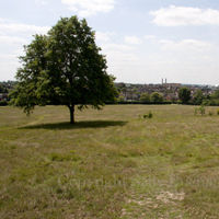 Gladstone Park Meadow Cut 1 pre recut on the14th June 2011