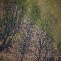 Gladstone Park Meadow Edge