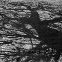 Gladstone Park Shadow number 8