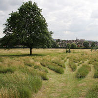 Later on Gladstone Park Meadow Cut 1 on the 28th July 2012