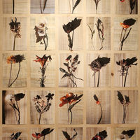 The Vegetable Flower Prints