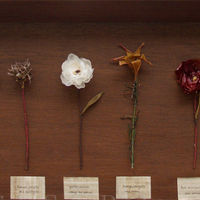 Vegetable flower specimens