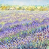 Mayfield Lavender - SOLD
