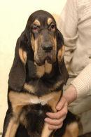 Barvicka at 4 months.
