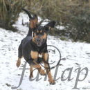 Barvicka enjoying a bit of snow