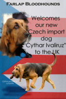 Cythar Ivaliruz our new dog hound, imported from the Czech Republic October 2007