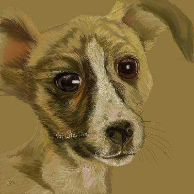 Tom's Puppy