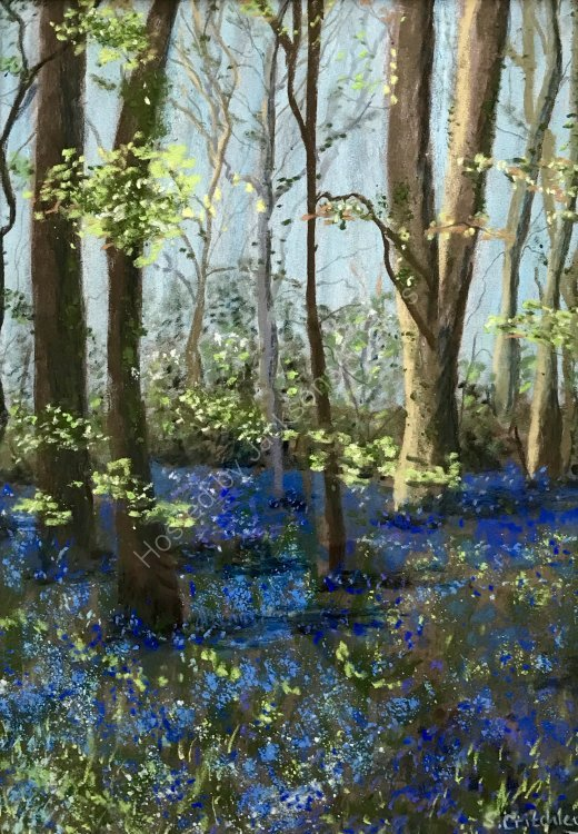 Bluebell time at Godolphin, Cornwall