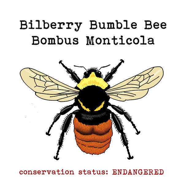Bilberry Bumble Bee