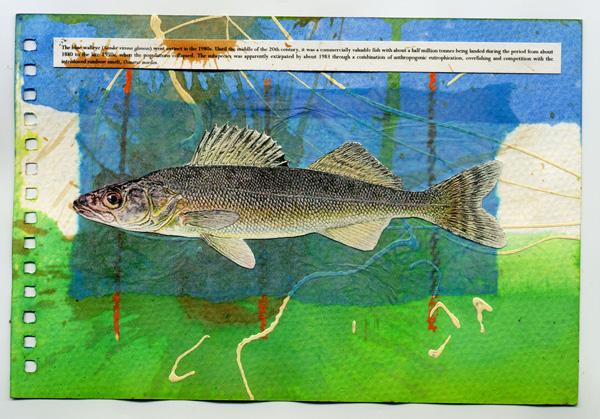 Blue Walleye