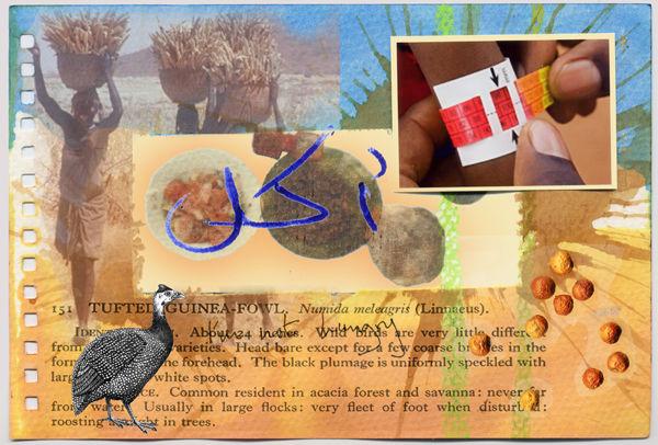Tufted Guinea-Fowl