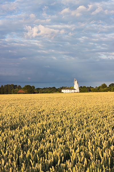 Flack's Green wheat