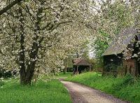 Stoke Tye blossom